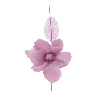 Helleborus Summer lila roze