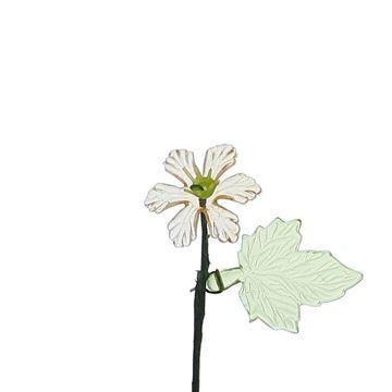 Leverbloem met blad perzik