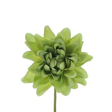 Aster Queen licht groen