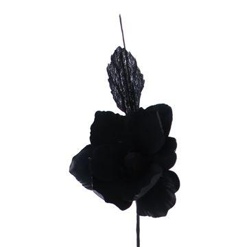 Helleborus Summer zwart