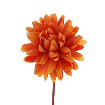Dahlia KM oranje
