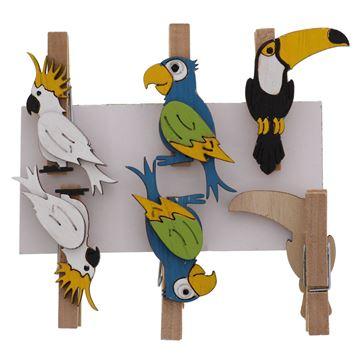 Birds Exotica speld