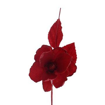 Helleborus Winter rood