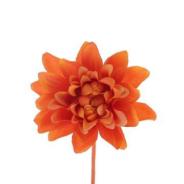 Aster Queen donker oranje