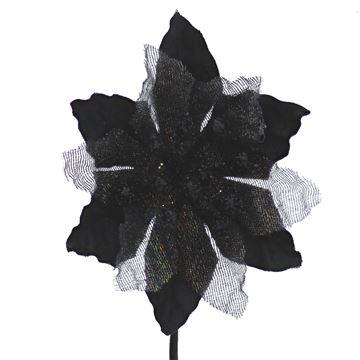 Poinsettia KM zwart