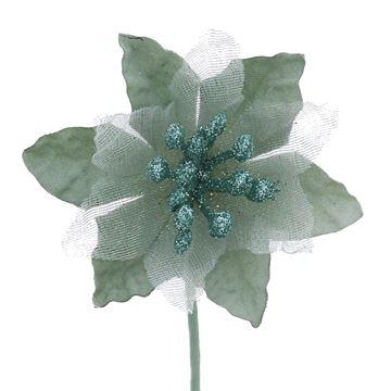 Poinsettia KM smokey green