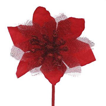 Poinsettia KM rood
