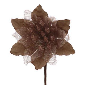 Poinsettia KM bruin